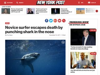 Novice surfer escapes death by punching shark in the nose - New York Post